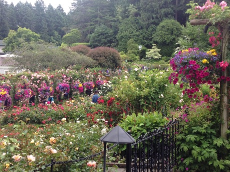 Some of the vivid flowers of Butchart Gardens. photo by Karen Kuzsel